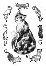 Les Aventures du chat Coton, chapitre 7